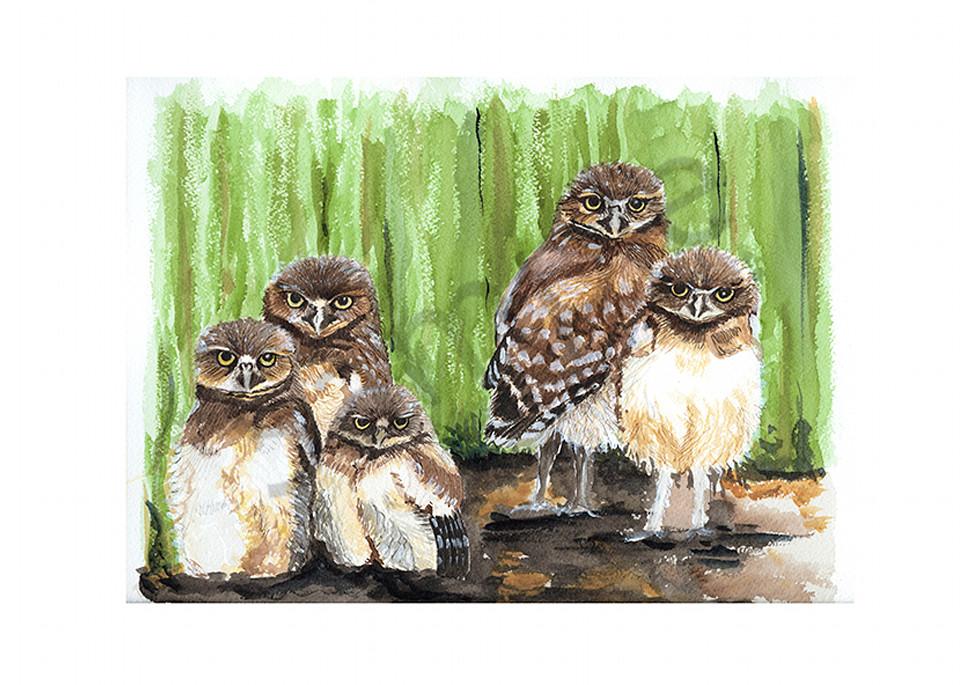 Young Burrowing Owls Art   Digital Arts Studio / Fine Art Marketplace