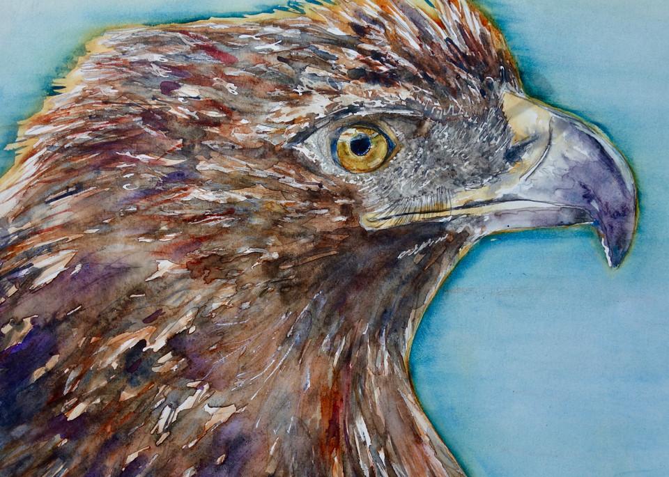 Hawkeye the Red-Tailed Hawk
