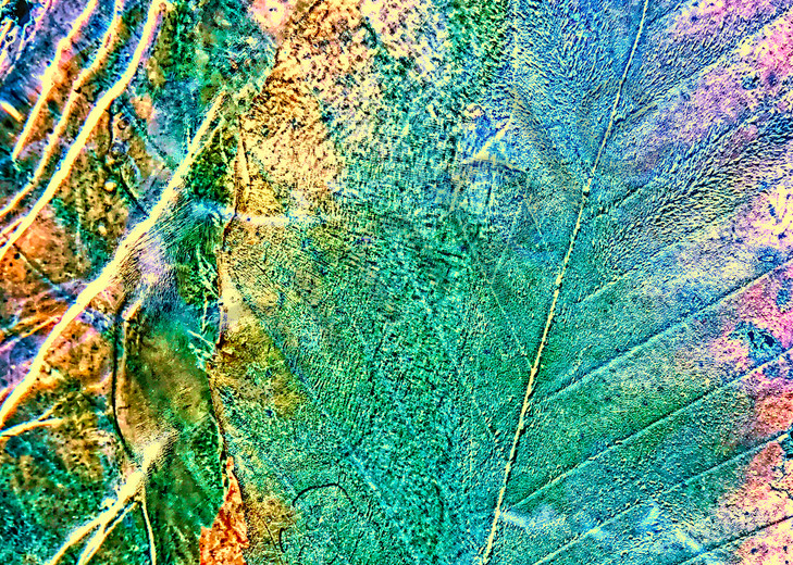 In The Moment|Fine Art Photography by Todd Breitling|Trees and Leaves|Todd Breitling Art