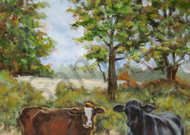 Cows Admas Scan