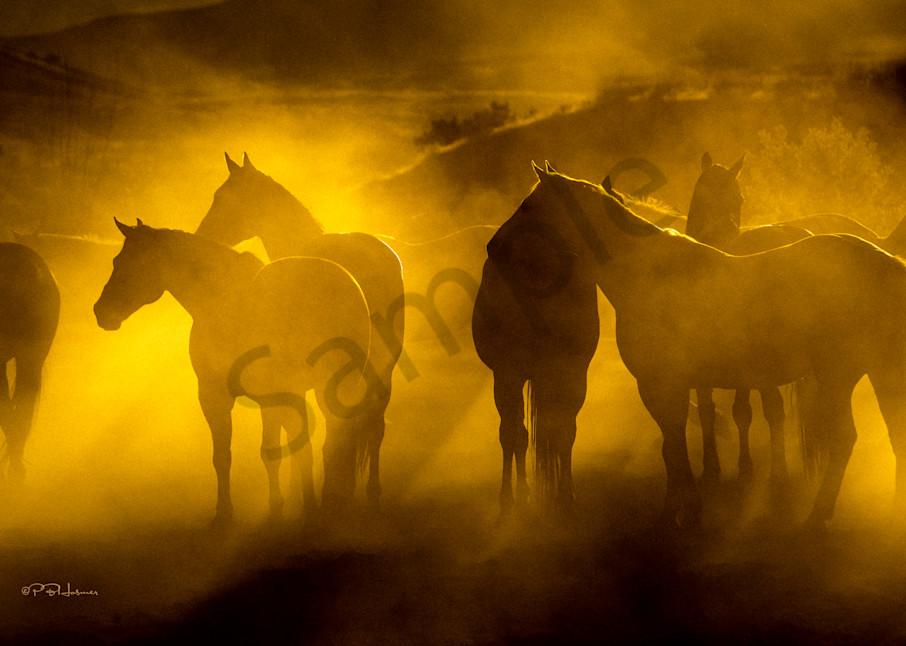 Cowponies at Dusk
