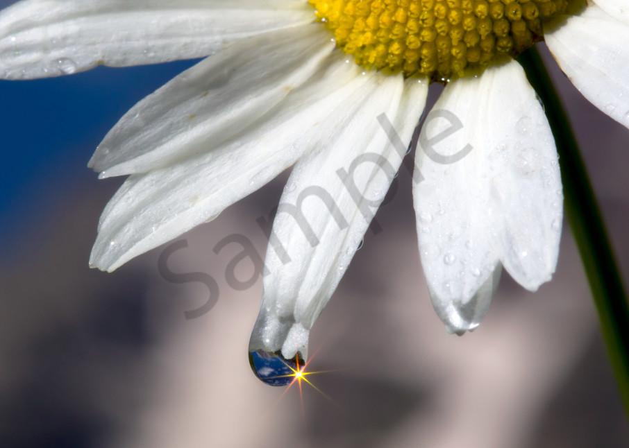 Daisy | Robbie George Photography