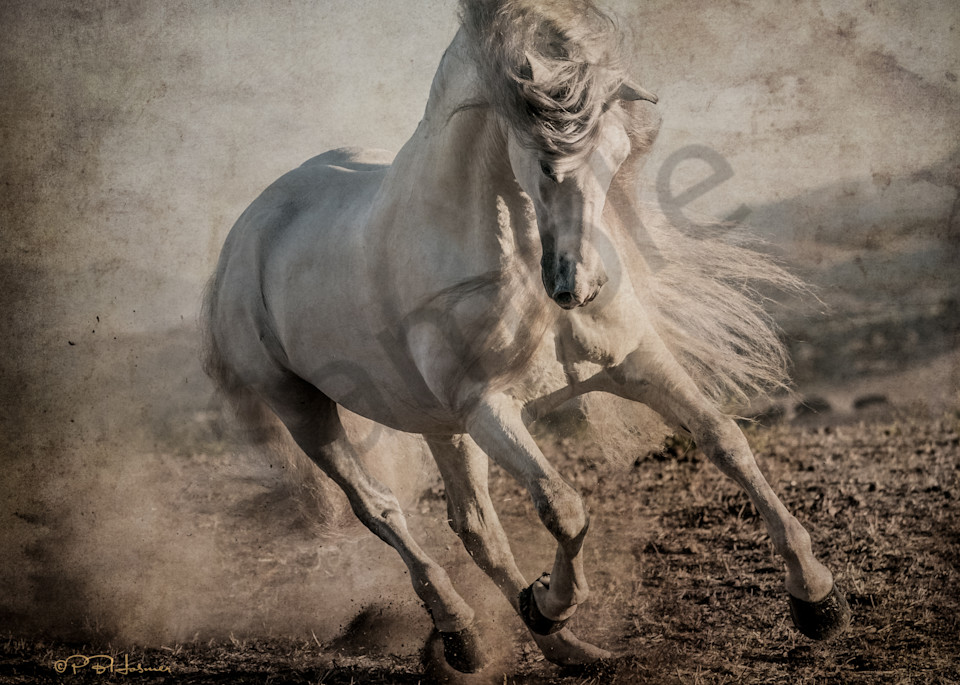 Bucephalus Returns