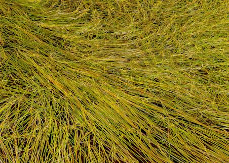 Grass Study Art | Scott Cordner Photography