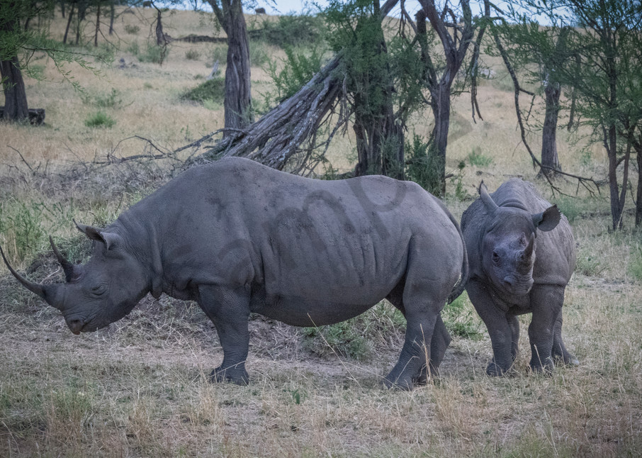 Black Rhinos of the Serengeti - Wildlife fine art photography