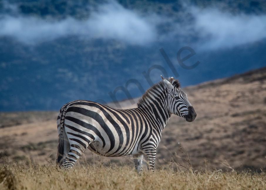 Zebra of the Ngorongoro Crater Africa - fine art photography prints - JP Sullivan Photography