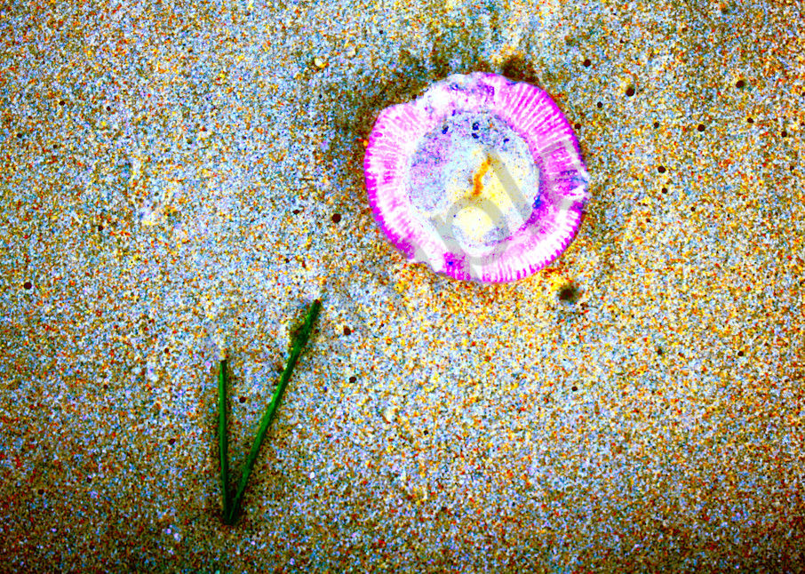 Jellyfish and Seaweed|Fine Art Photography by Todd Breitling