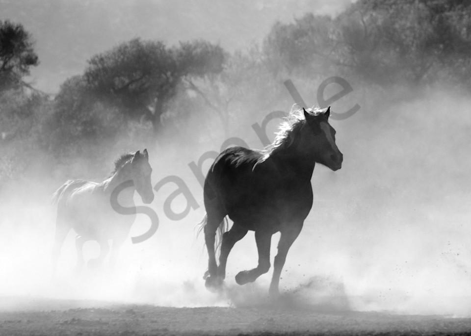 24x18 Horses Art   demofineart