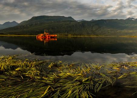 """Orange """"monster"""" in Alaskan Lake"""