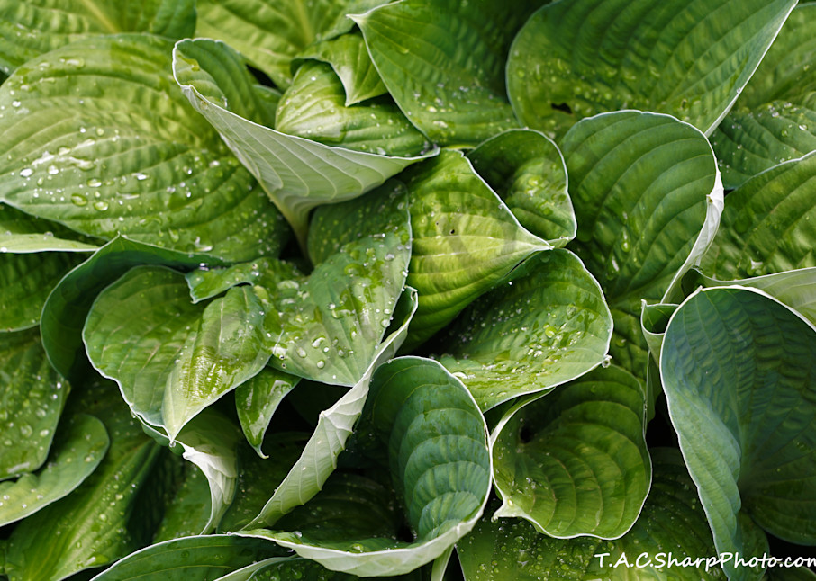 Plant 4264952 Copy Art | Lucy Anna Perna