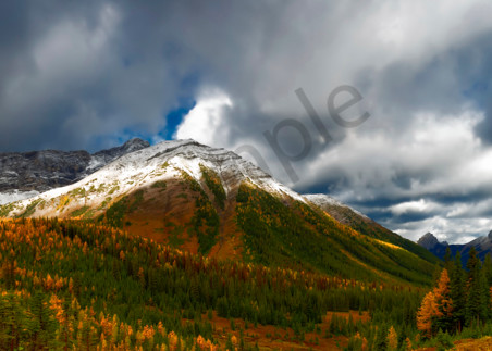 In Banff, this high alpine valley is covered with Larch trees in bloom.| Canadian Rockies|Banff National Park|Rocky Mountains|