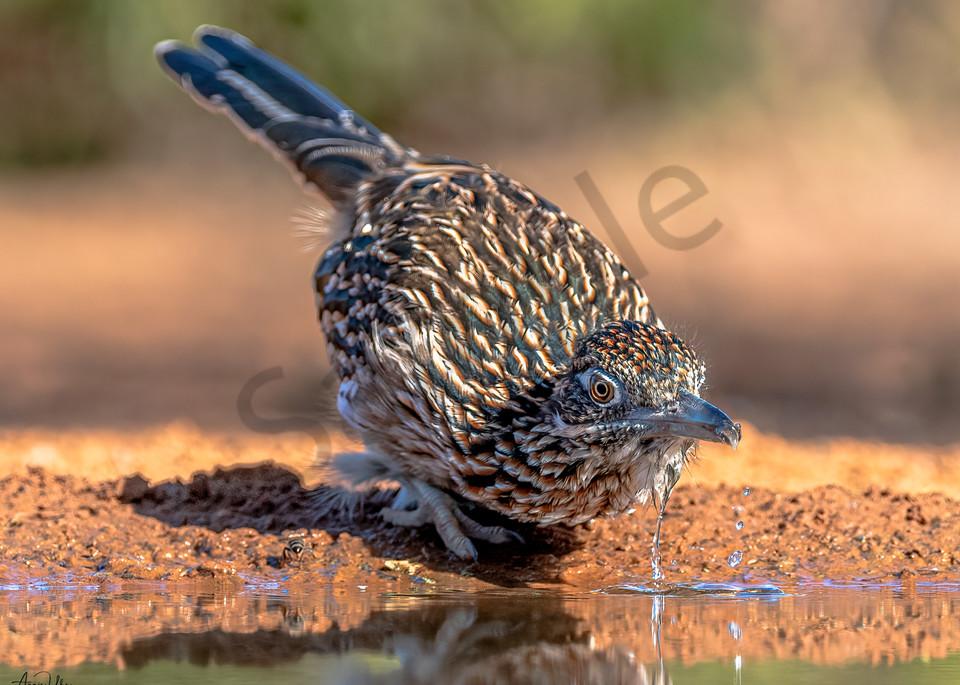 thirsty runner