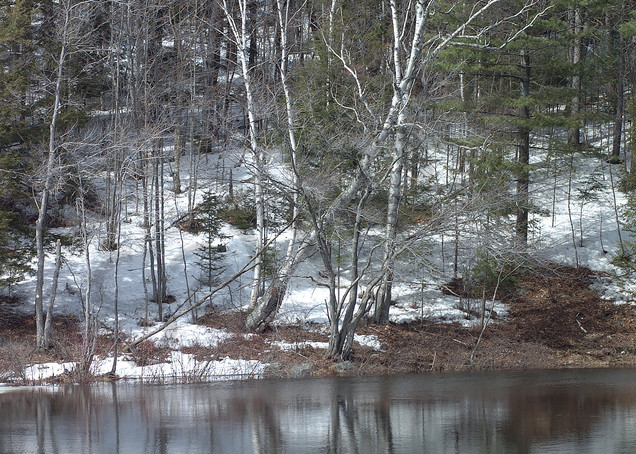 Photography By Festine white birch trees reflections