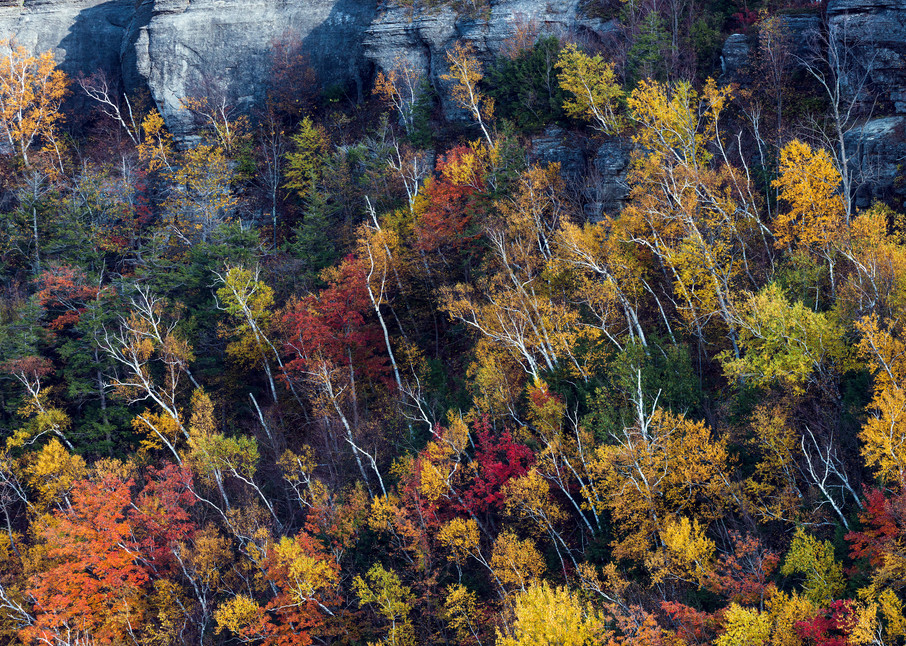 Photography By Festine white birch trees