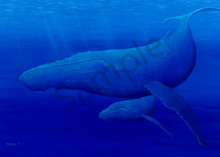 trozzo-whales