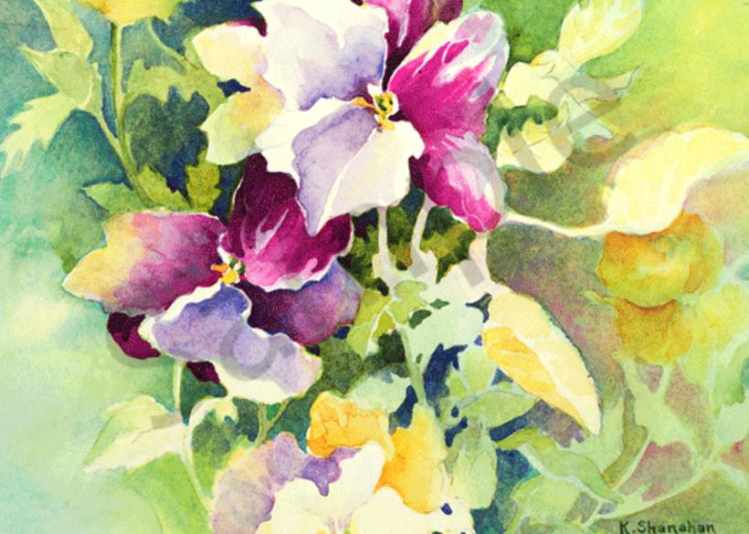 Pansies fine art print by Karen Shanahan.
