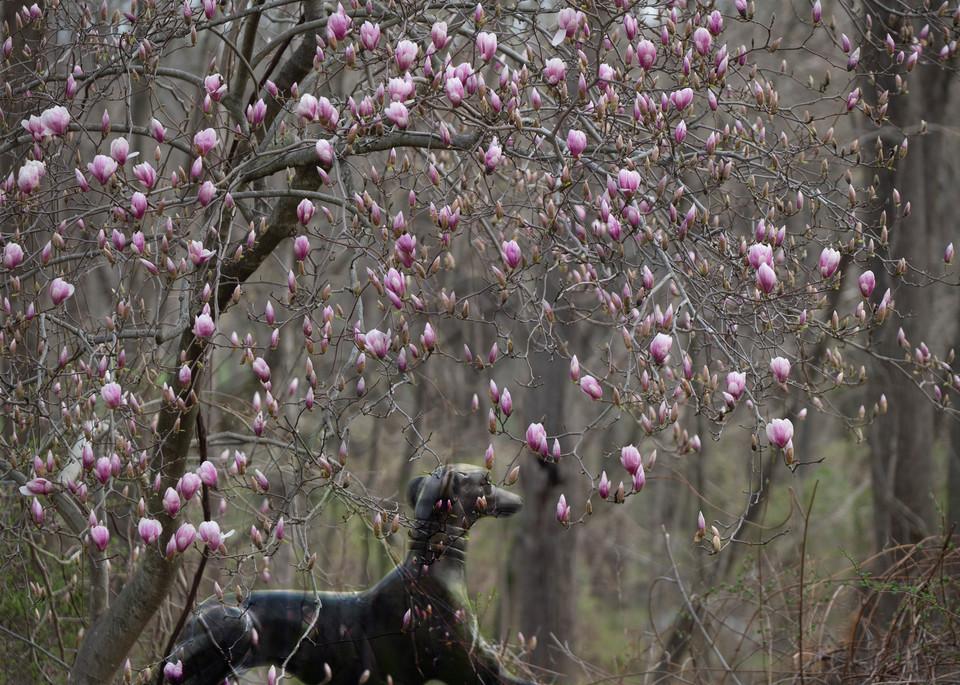 Spring Blooms Photography Art | Kim Bova Photography
