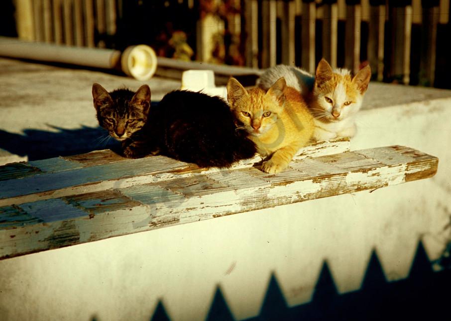 Bahama cats