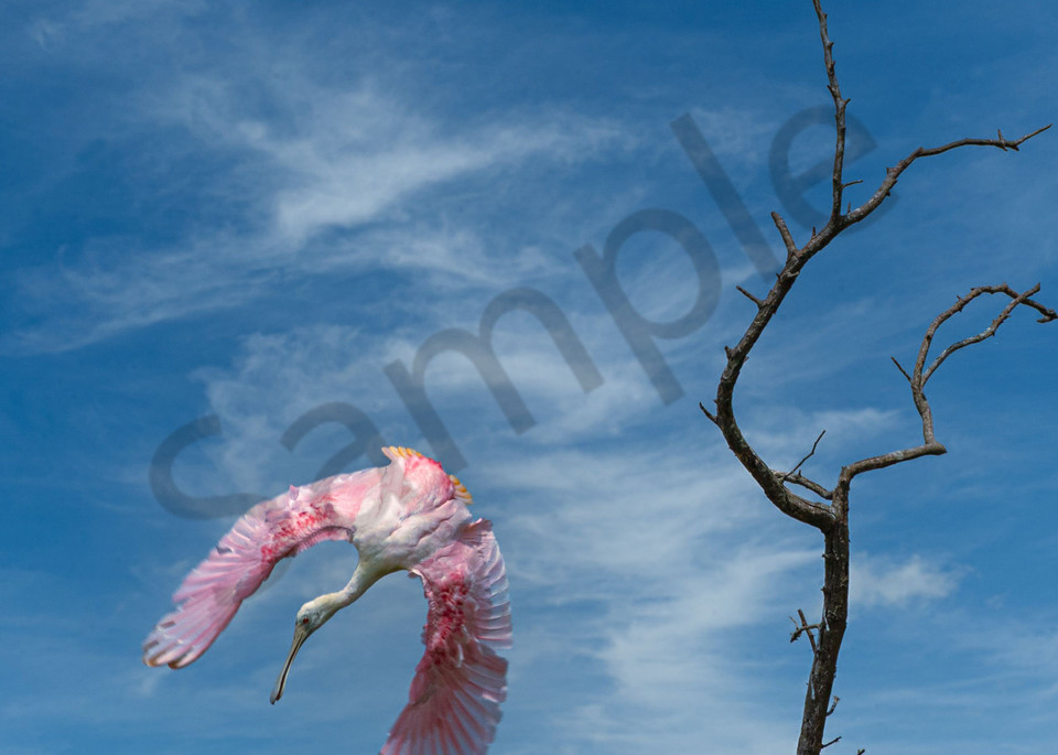 Deep Dive Photography Art | John Martell Photography