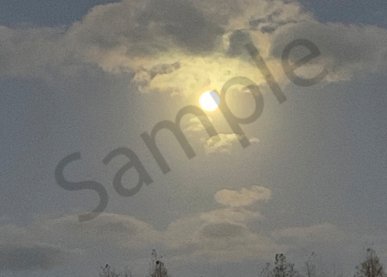 Full Moon Over The Pines Photography Art | It's Your World - Enjoy!