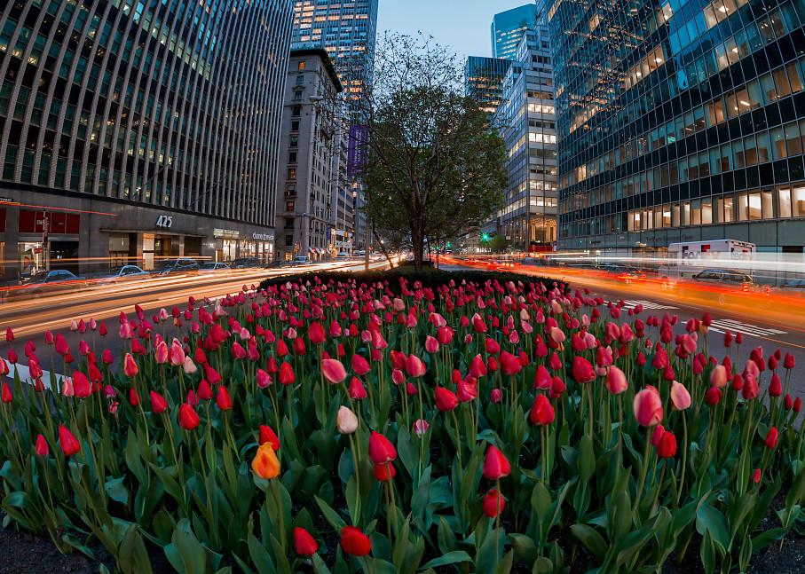 Light trails around tulip display on Park Ave