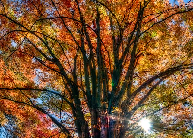Sun rising behind colorful tree