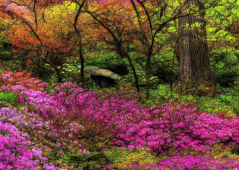 Colorful azalea garden