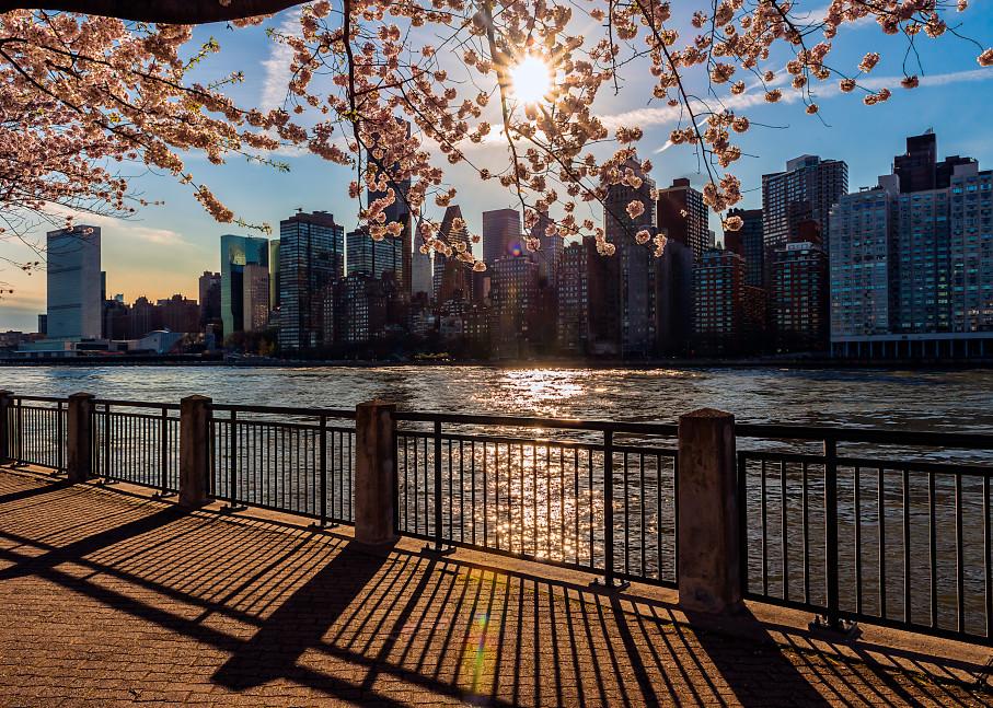 Cherry blossoms above Manhattan skyline