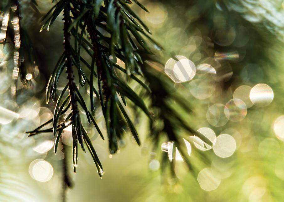 Soft-focused pine needles
