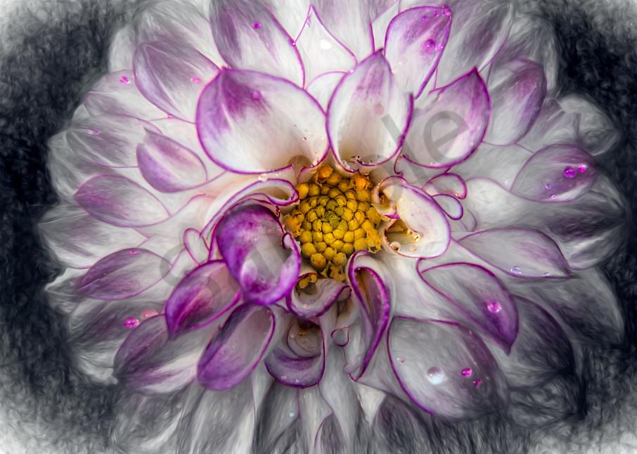 Mixed-media view of purple/white dahlia