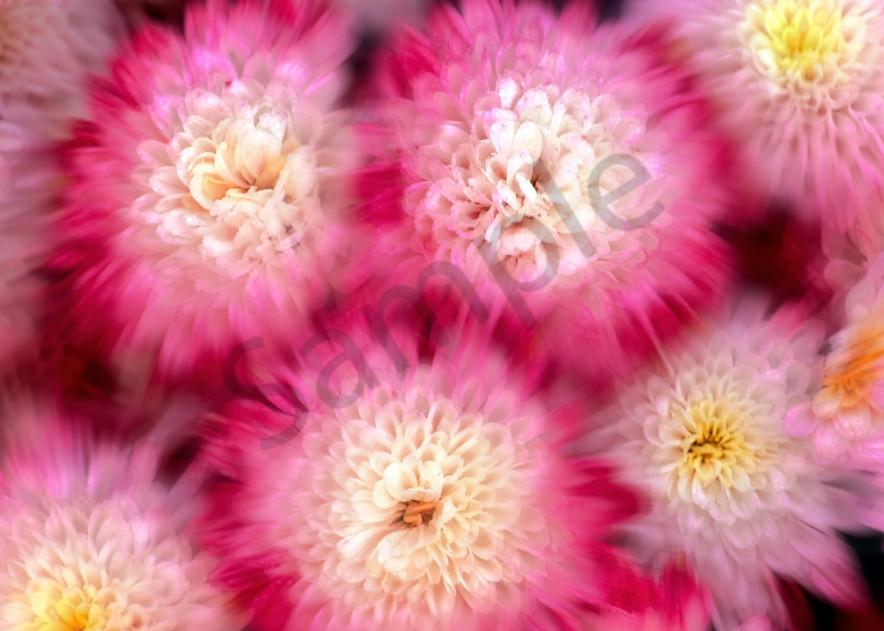 Blur effect on chrysanthemums