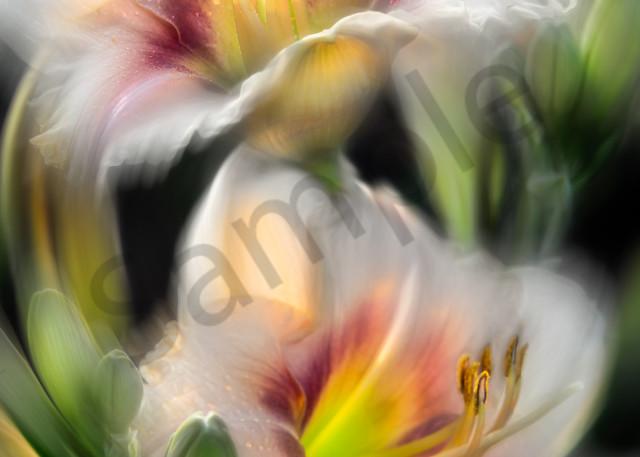 Soft-focused daylilies