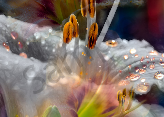 Daylily enhanced by multiple special effects