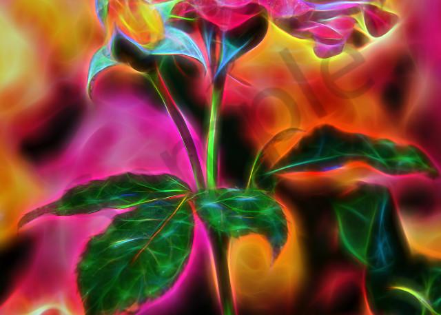 "Floribunda ""neon"" roses"