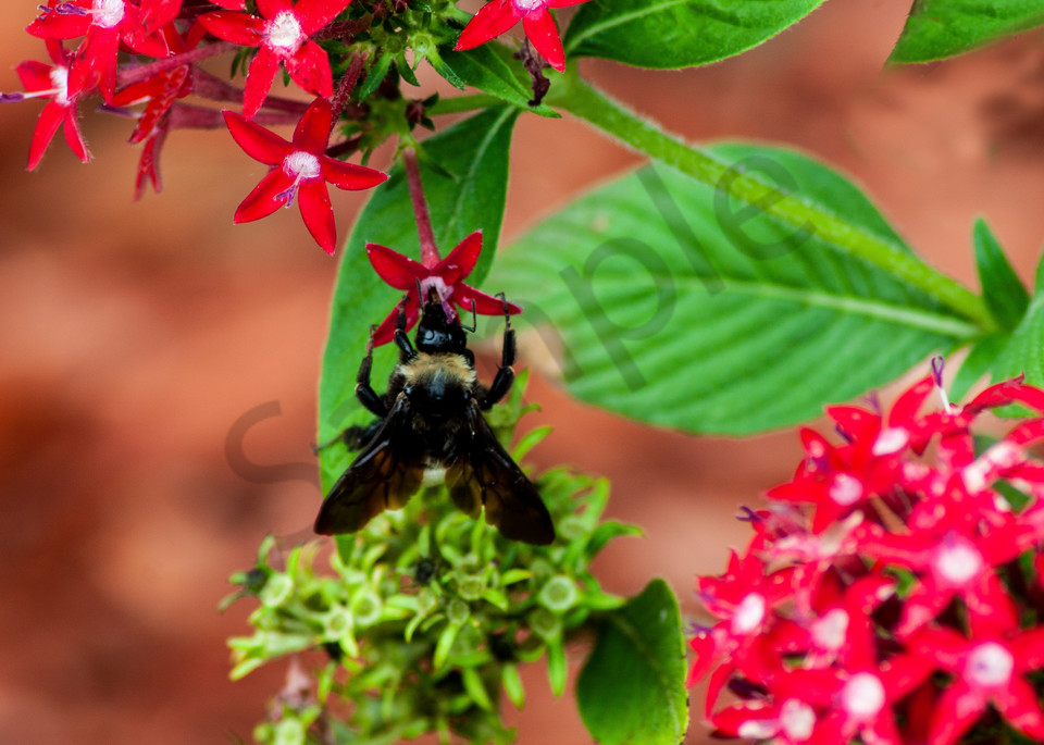 Worker Bee Photography Art | It's Your World - Enjoy!