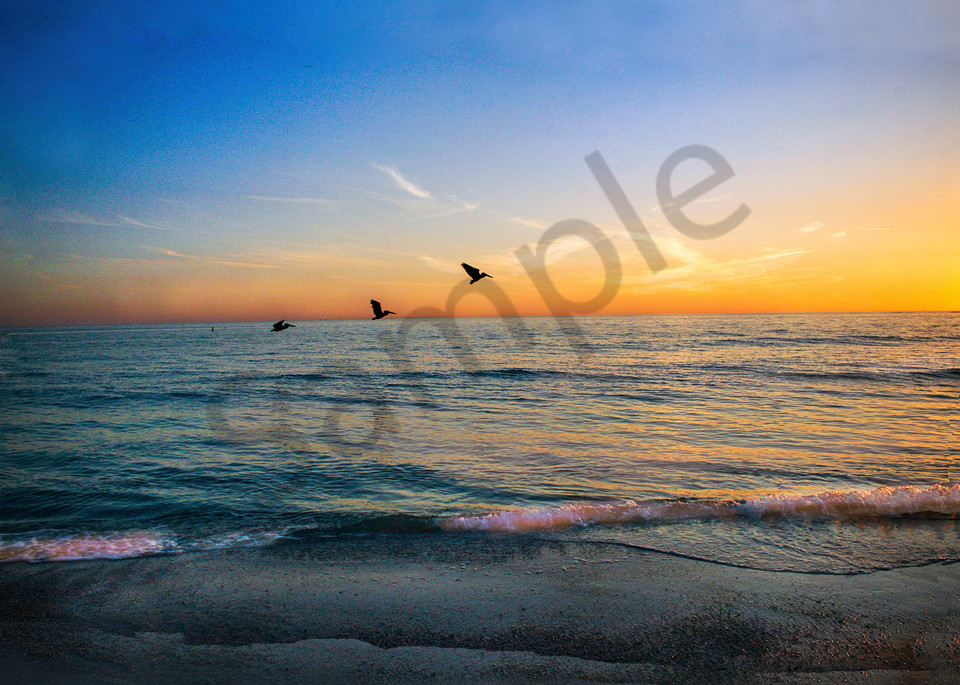 Pelicans Taking Off Photography Art | It's Your World - Enjoy!