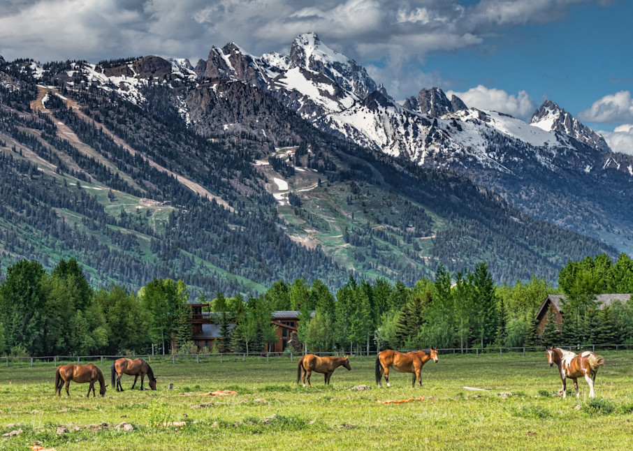 Horse Ranch in Jackson Hole