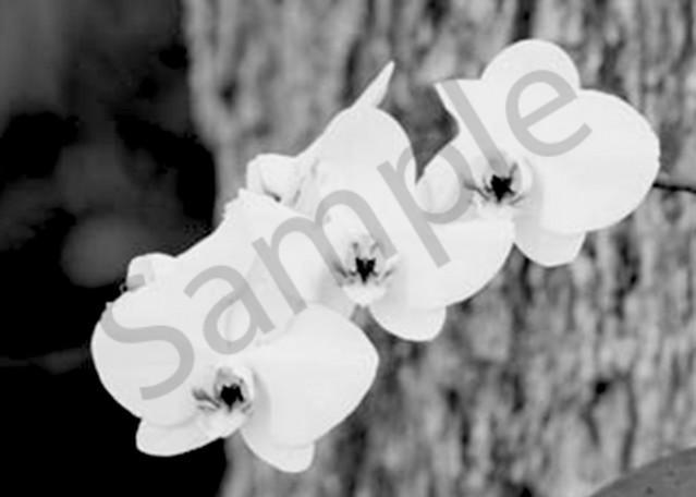 Orchid1 Photography Art | CLAUDIA LARRAIN