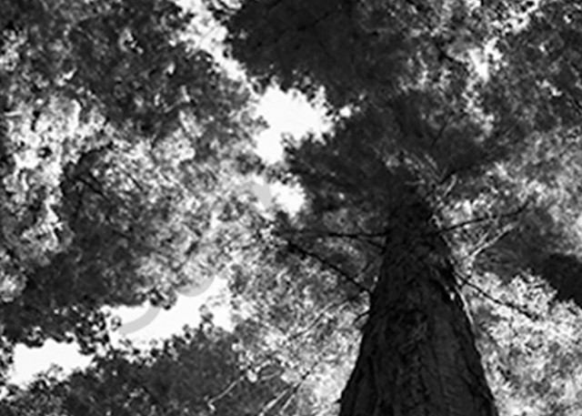 Redwood2 Photography Art | CLAUDIA LARRAIN