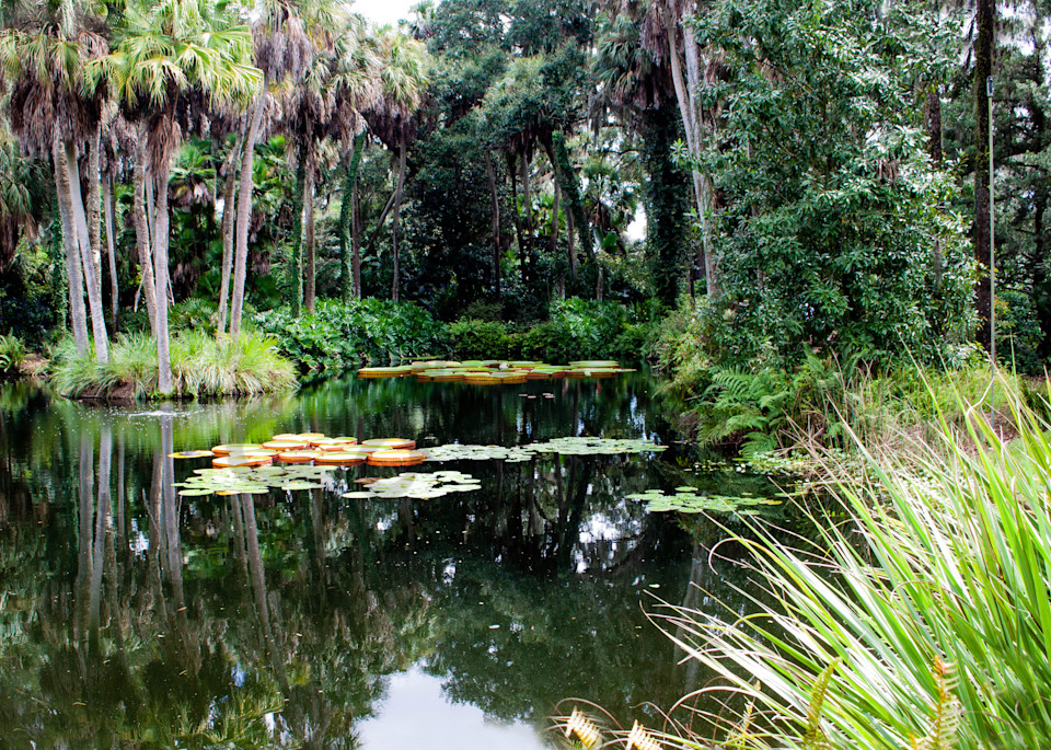 The Pond Photography Art   It's Your World - Enjoy!