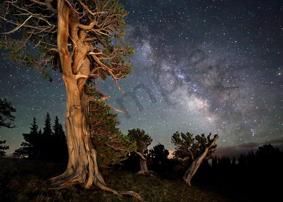 5828 Tree Sprite Art | Cunningham Gallery