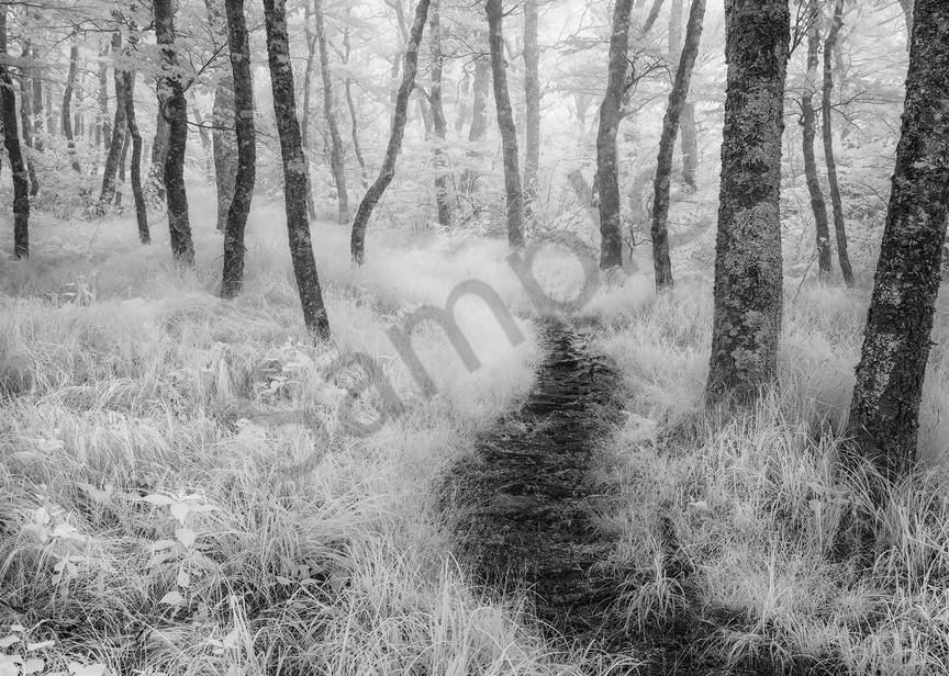 Rambling through Forest Fog I Photograph