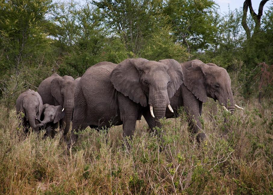 8971 Elephant Family Art   Cunningham Gallery