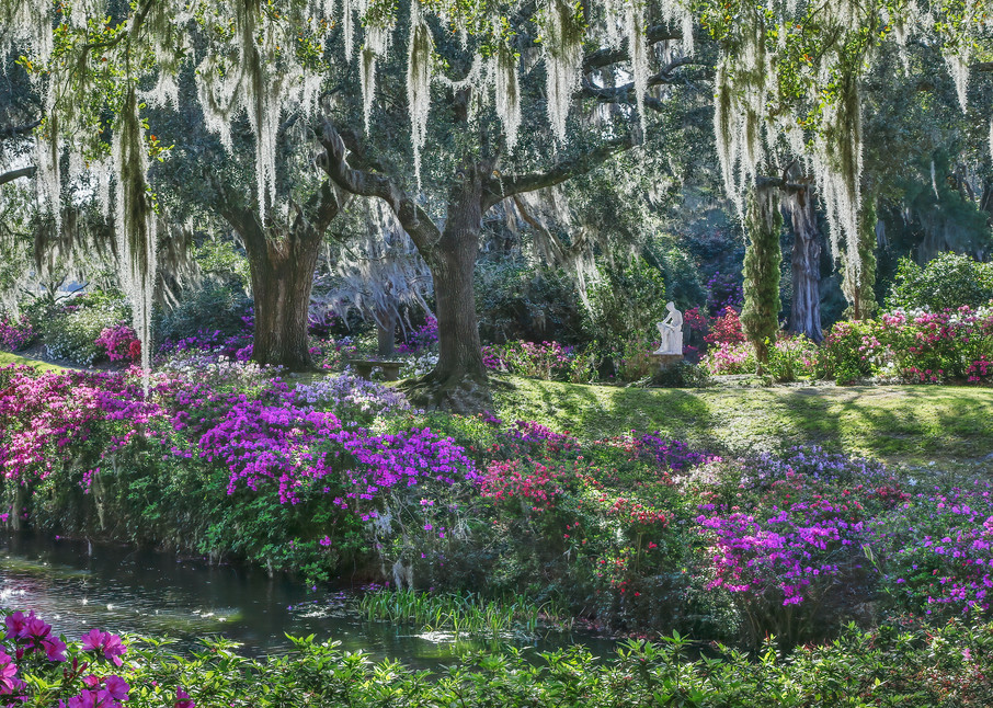 Springtime in the South Photograph