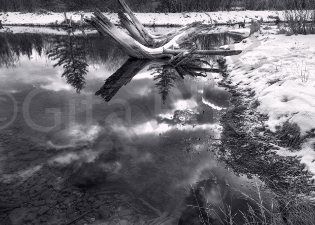 A small Alpine Tarn or Pond by the Vermilion Lakes in Banff. Canadian Rockies|Banff National Park|Rocky Mountains|