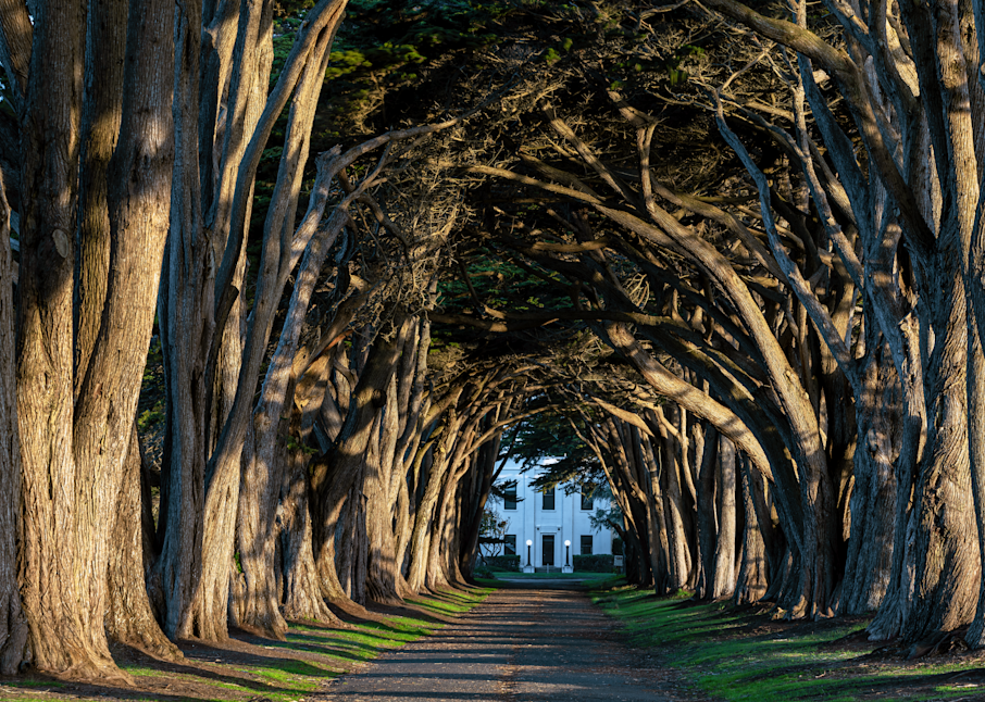 Print Art Point Reyes California The Cypress Tree Tunnel