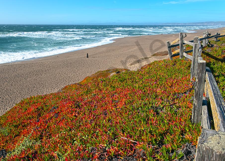 Art Print Point Reyes National Seashore California North Beach