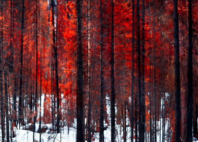 After Burn Art | Gita Photos