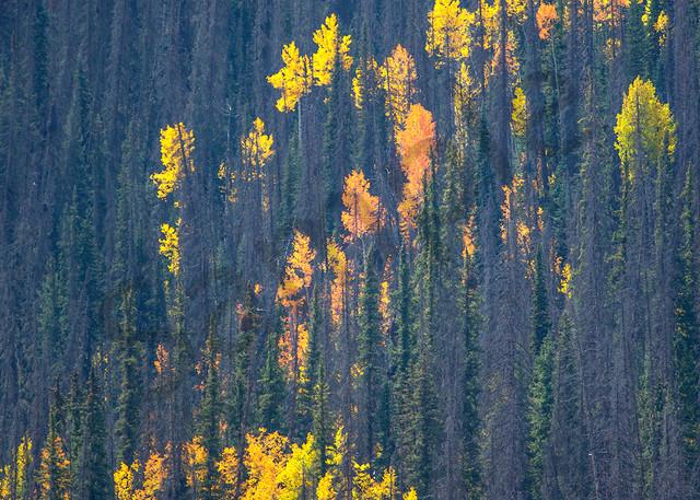 0701 Splash Of Fall Art | Cunningham Gallery