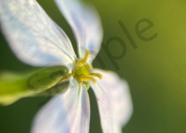 Macro Flower Photography of Radishes
